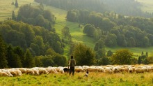 The LORD is my shepherd a reflection on Psalm 23